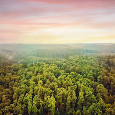 feel the breath of earth ... #forrest #evening #nature #naturephotography #naturelovers #naturelover #dji #drohnenfotografie #dronephotography #breath #life